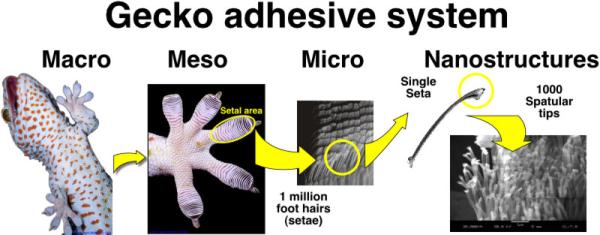 Gecko Foot Detail
